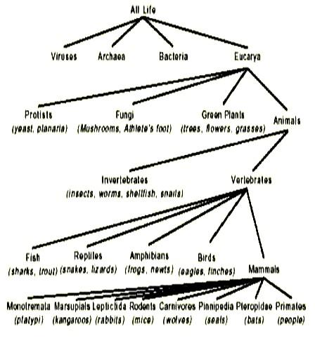 80 taxonomy